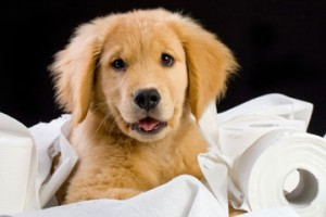 Pet Odor Cleaning   Shorewood IL   815-730-9450